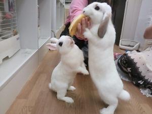 バナナを食べるうさぎ