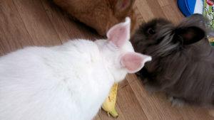 バナナだぁっ!
