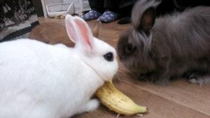 バナナを置いてみました