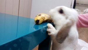 バナナ欲しーっ!