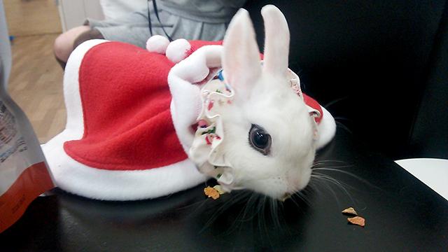 クリスマスびび