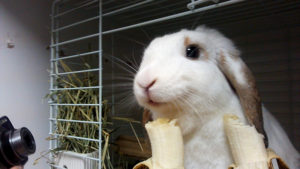 バナナがいっぱいだぁーっ