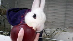 魔王さまリンゴをかじる