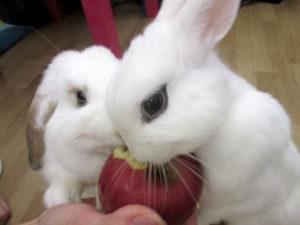 仲良くリンゴ