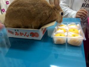 食べちゃダメ!