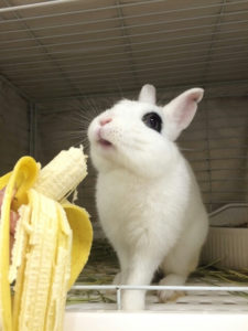 かぼすが走る!かぼすが飛ぶ!→バナナのCM?7