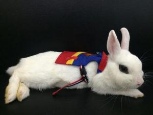びび様は世界を救う!…献血のご報告7