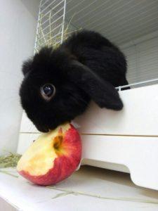 うさびびうさぎたちのりんごの食べ方!7