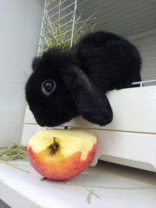 うさびびうさぎたちのりんごの食べ方!5