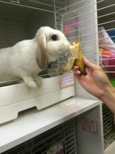 バナップルを頂きました。1