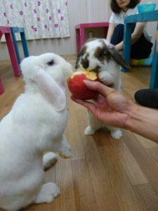 うさびびうさぎたちのりんごの食べ方!2