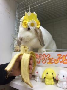 ミッシュちゃんの誕生日の様子&9月生まれの子4