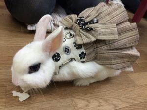 ヤマトナデシコ七変化☆(永久保存版)4