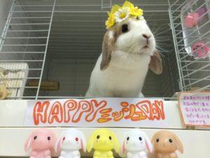 ミッシュちゃんの誕生日の様子&9月生まれの子2