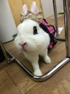 ゴスゴス☆ロリロリなびび様♪!2