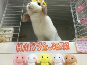 ミッシュちゃんの誕生日の様子&9月生まれの子1