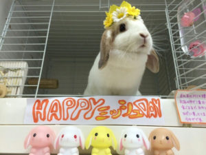 今日はミッシュちゃんの誕生日です☆4