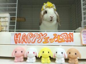 今日はミッシュちゃんの誕生日です☆1