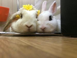 花うさぎミッシュちゃん♪2