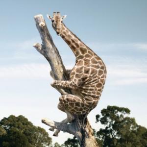 キリンの進化