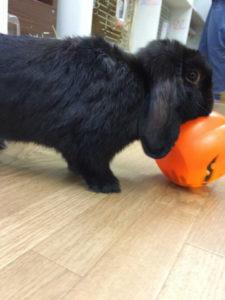 たまのハロウィンかぼちゃ☆7