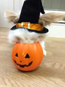 たまのハロウィンかぼちゃ☆4