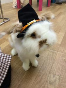 たまのハロウィンかぼちゃ☆6