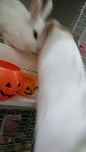 小さなかぼちゃと大きなかぼちゃ!6