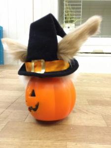たまのハロウィンかぼちゃ☆2