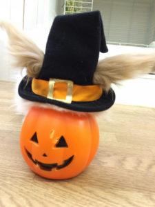 たまのハロウィンかぼちゃ☆1