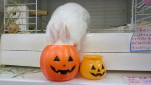 小さなかぼちゃと大きなかぼちゃ!4