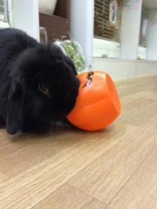 たまのハロウィンかぼちゃ☆8