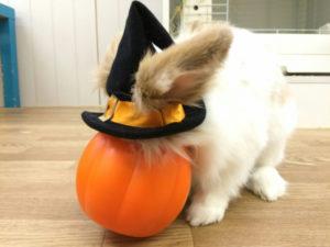 たまのハロウィンかぼちゃ☆3