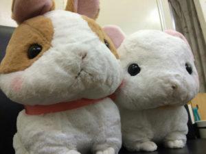 ナキウサギにも順位づけするたま☆1