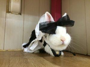 フリル服ブランドの「リフル様」×うさぎカフェうさびびとコラボ!3