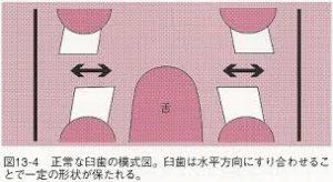 【新】うさぎの不正咬合の予防…正しい歯の削り方2