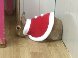 クリスマスの奇跡☆ミッシュちゃん牧草を食べる!!(゜ロ゜ノ)ノ4
