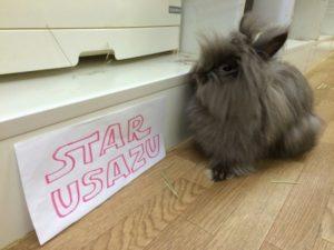 STAR WARS 「フォースの覚醒」公開を記念してチューバッカ☆1