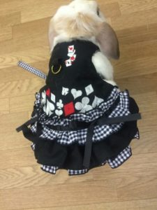 フリル服のリフル様×うさぎカフェうさびびとのうさぎハーネス完成間近!1