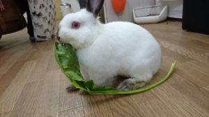 おおきな小松菜にうさぎたちは大興奮?2