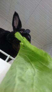 おおきな小松菜にうさぎたちは大興奮?8