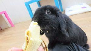 バナナだけは特別なんです!4