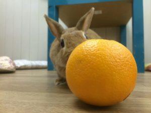 みかんとオレンジ4