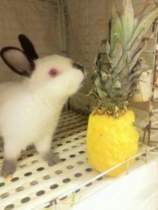 まるごとパイナップル☆2