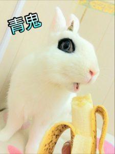 節分の赤鬼うさぎと青鬼うさぎ☆…うさぎホテル3
