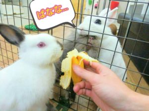うさぎさんにバナナが見つかったらたいへん!…同伴うさぎさんのたまご君2