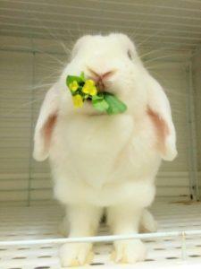 うさぎの花4