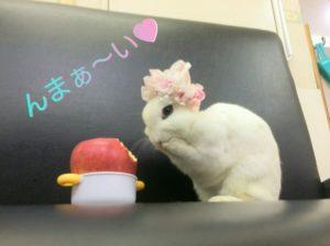びび様愛☆3
