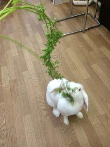 うさびびのボス「たま!」…にんじんの葉っぱプレゼント☆14