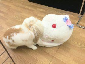 うさびびのボス「たま!」…にんじんの葉っぱプレゼント☆5